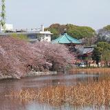 2014 Japan - Dag 11 - tom-SAM_0590-0012.JPG