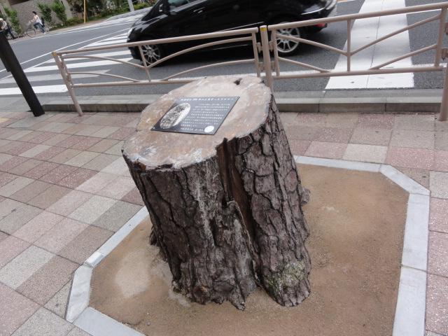 東海道を200年以上見守ったクロマツ 東海道五十三次