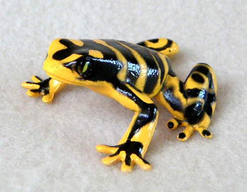 katak panah beracun