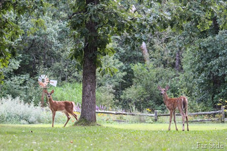 The Fawns Aug 18 (2)