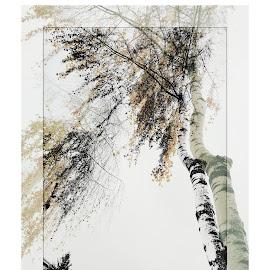 Birch by Zenonas Meškauskas - Digital Art Abstract ( birch, double, tree, autumn )
