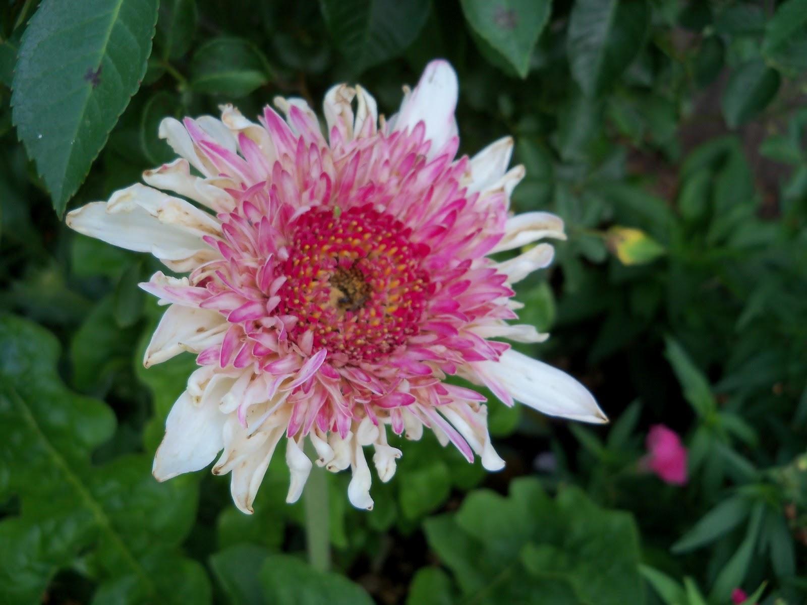 Gardening 2011 - 100_8147.JPG
