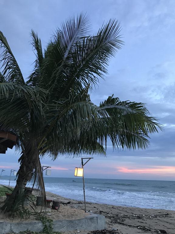 [Palm-tree6]