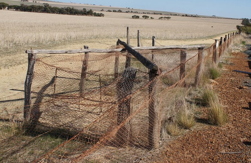 rabbit-proof-fence-6