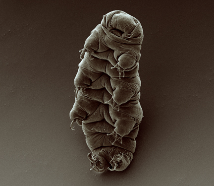 What Makes Tardigrades So Special?