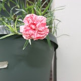 Gardening 2012 - IMG_3762.JPG