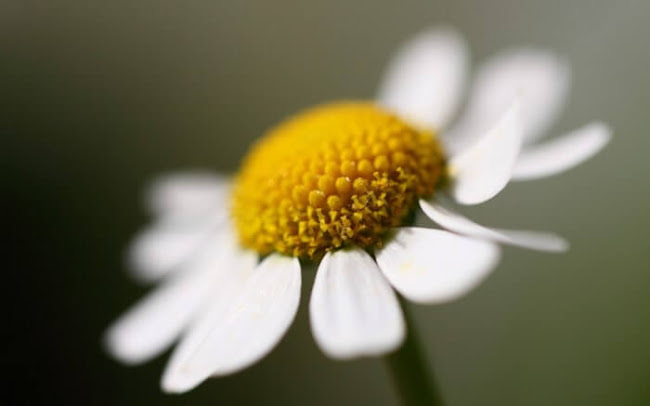 Florists Derby: Preferred Flowers From Australia