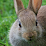 Disciplining Rabbit's profile photo