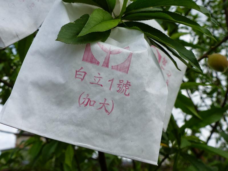 Yilan, Neicheng - P1030420.JPG