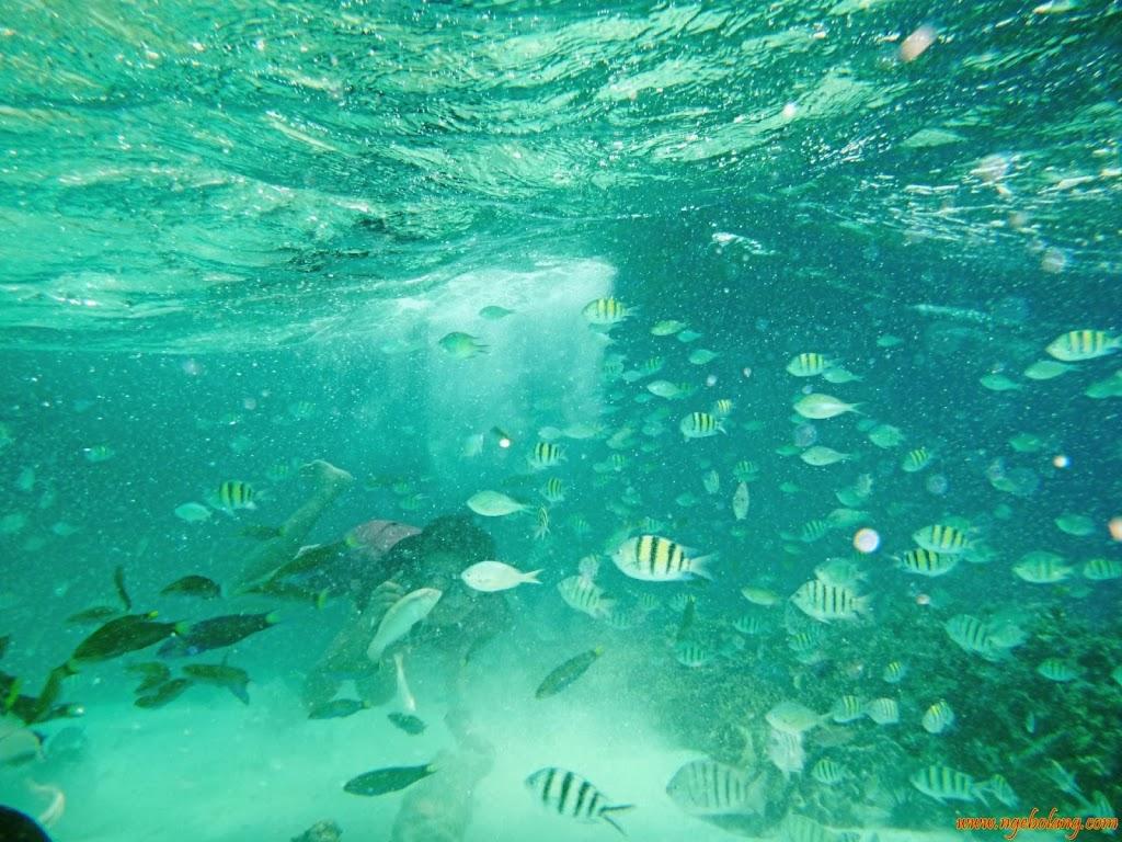 ngebolang-pulau-harapan-singletrip-nov-2013-wa-09 ngebolang-trip