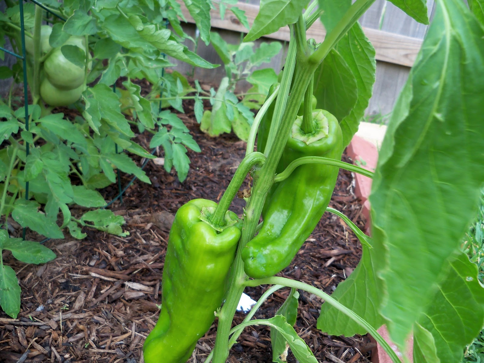 Gardening 2011 - 100_8830.JPG