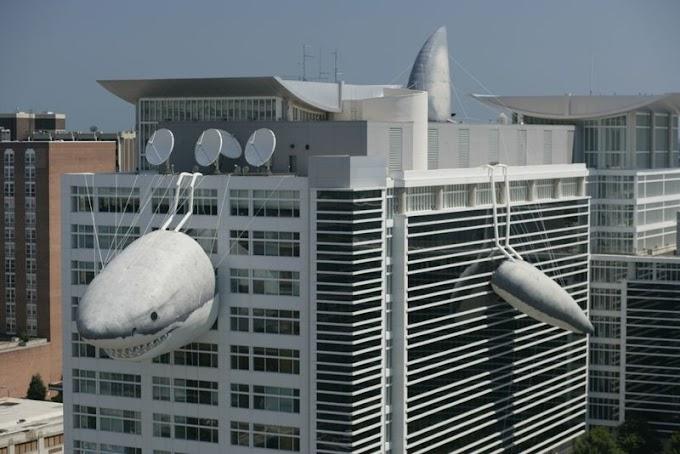 Así celebró en su sede central Discovery Channel la semana de los tiburones
