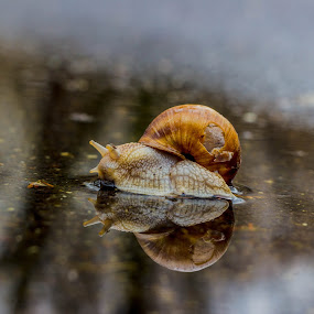 Happy by Daniel MV - Animals Other ( nail, colors, beautiful, spring, rain )