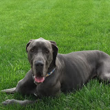 Dynamite Danes Family Album #3 - photo%2B1.JPG