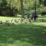 Подростки на великах прибыли, это к ним устремились все гуси-утки