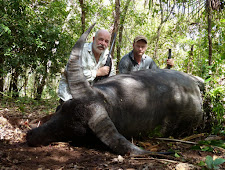 Ali Toksoy from Turkey took this wide bull in heavy brush. Both his 375 H&H and my 470 NE were required to bring him down.