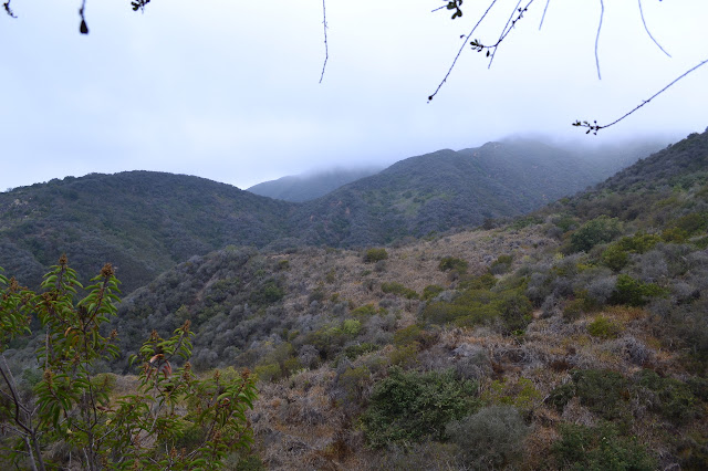low clouds over fairly brown chaparral