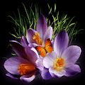 Purple Flowers Butterflies LWP APK