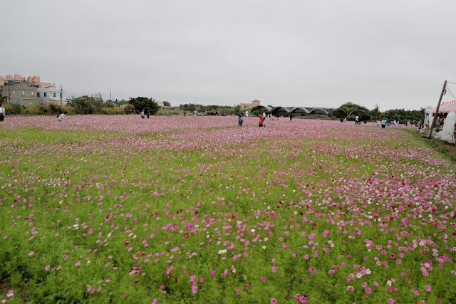 2020桃園花彩節 大園區 溪海休閒農業區