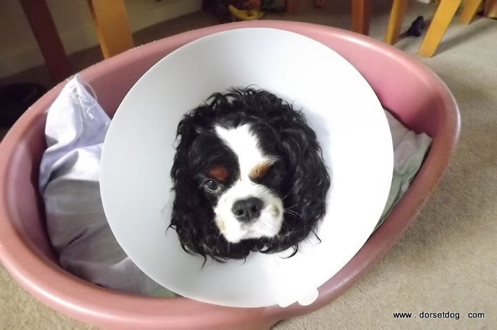 Cone of shame - Elizabethan collar lamp shade
