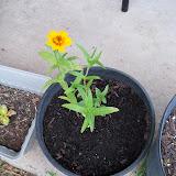 Gardening 2010, Part Two - 101_2956.JPG