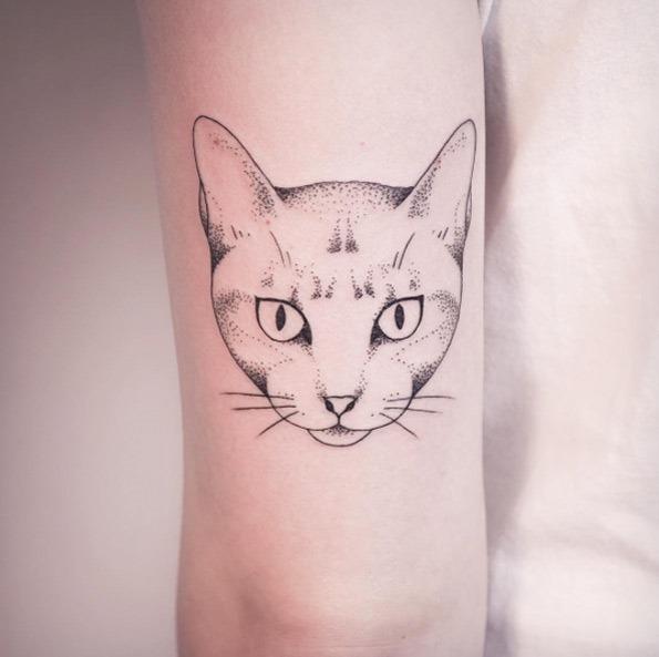 Este gato