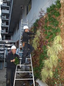 mur végétal ( Rainier 3 ) à MONACO