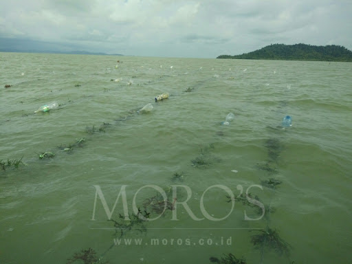 Moro's Seaweed Farm co. di Google