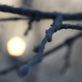 snowflake and sun by Aleksandar Zhivkov - Nature Up Close Natural Waterdrops ( tree, snow, snowflake, snowing tree,  )
