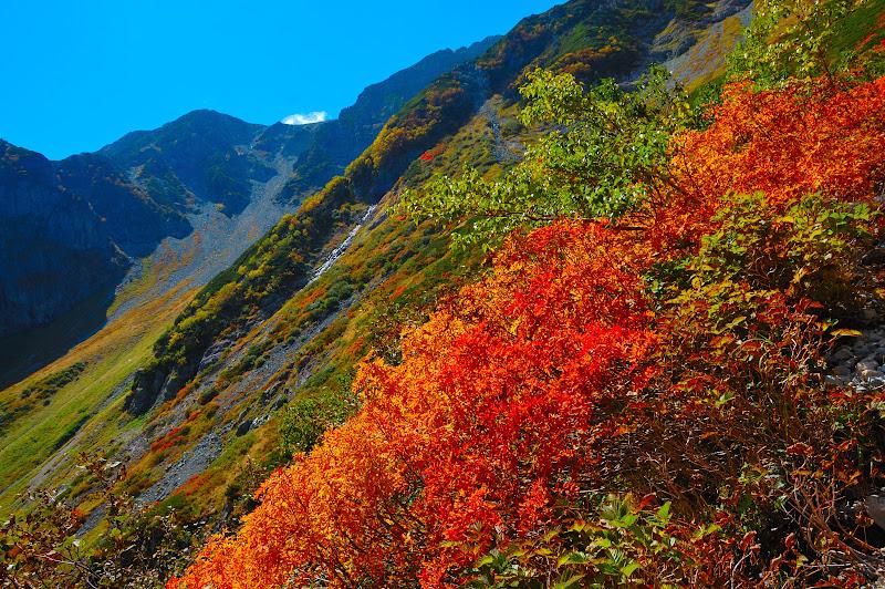 槍沢の斜面の紅葉