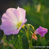 2013 Spring Flora & Fauna - IMGP6348.JPG