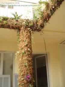 idée : végétalisation des piliers grâce à la sphaigne même technique que les murs végétaux le procédé Yves GRANGIER