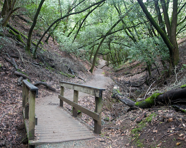 wildcat bridge