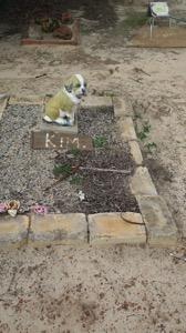 Dog Grave 005