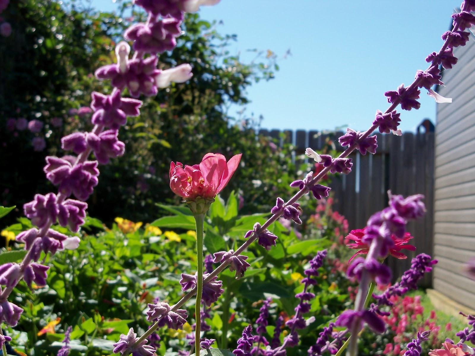 Gardening 2012 - 115_1562.JPG
