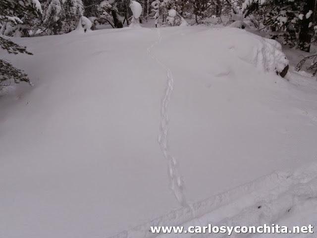 Huellas de animales en la nieve