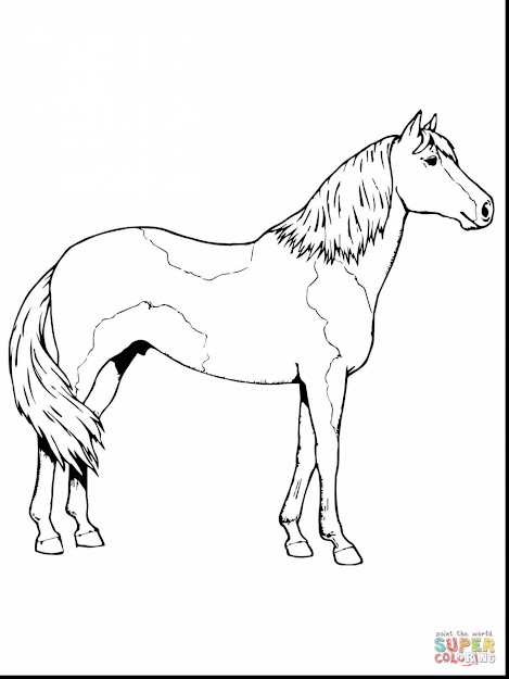 Stunning Paso Fino Horse Coloring Page With Horse Coloring Pages And Horse  Coloring Pages Free To
