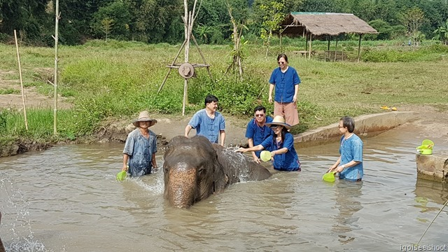 """Bathing the adult elephant at their """"swimming pool""""."""