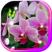 Amazing Orchid Live Wallpaper