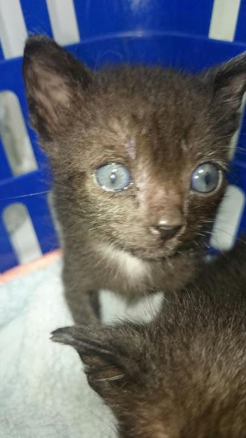 Gatito busca hogar en Luyando (Alava) IMG-20150912-WA0019