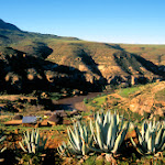 G73 Malealea  Aloes, Mar95.jpg
