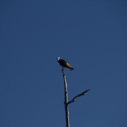 Fowl Marsh from Boat Feb3 2013 035