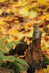 UN DISCOURS ! Automne dans un parc de la ville de Corner Brook, à Terre Neuve
