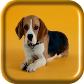 Beagle Puppy Live Wallpaper