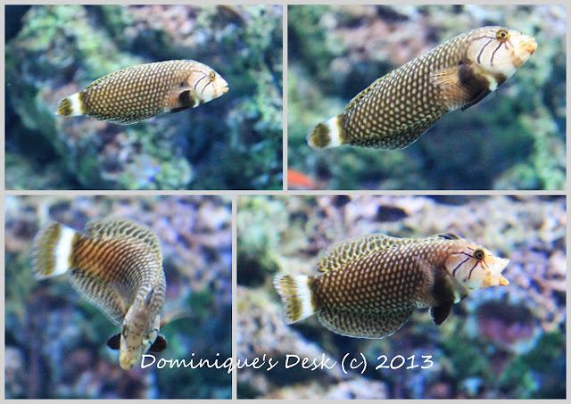 Fish swimming around