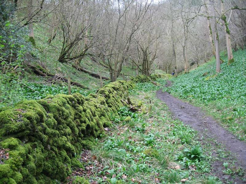 LB-Musden-Wood