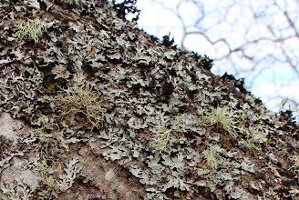 Photo: Lichen