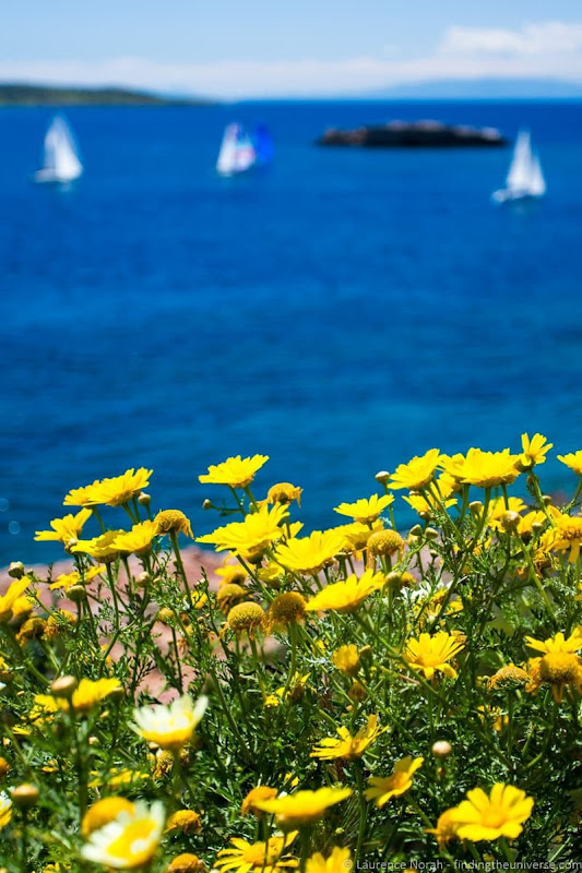 yachts and flowers greece