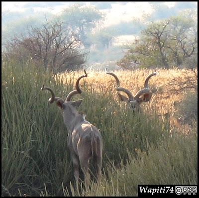Balade australe... 11 jours en Namibie IMG_0558