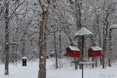 Snow Dec21